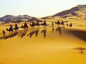 desert-camels